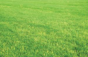 Our Berkeley Irrigation repair team keeps your lawn a pristine green